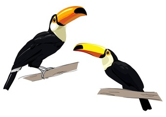 Fotoväggar - Toucan isolated on a white background. Exotic tropical bird vector.