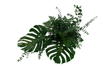 Wall Mural - Tropical green leaves foliage plants Monstera, fern, and Eucalyptus leaves with gold glitter particles floral arrangement bunch for wedding and ceremony decoration isolated on white with clipping path