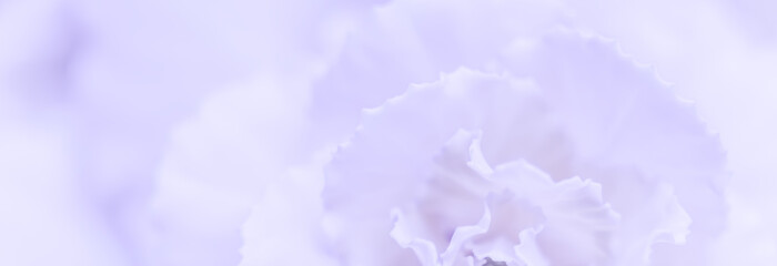 Foto auf Leinwand Blumen Abstract floral background, pale violet carnation flower. Macro flowers backdrop for holiday brand design