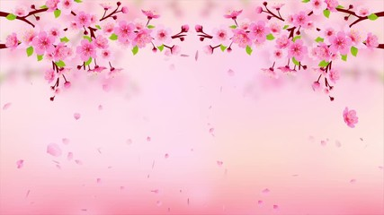 Wall Mural - Pink Cherry blossom branch with falling petals HD Animation. Motion Japanese spring sakura background