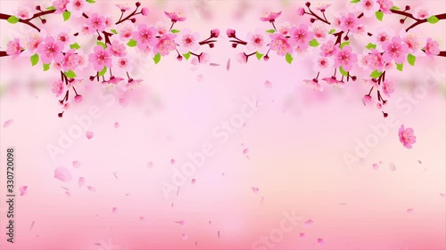 Wall mural Pink Cherry blossom branch with falling petals HD Animation. Motion Japanese spring sakura background
