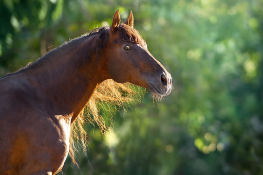 Red horse with long mane