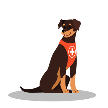 Dogs rescuer, Pinscher breed. Cadaver dog for finding people.