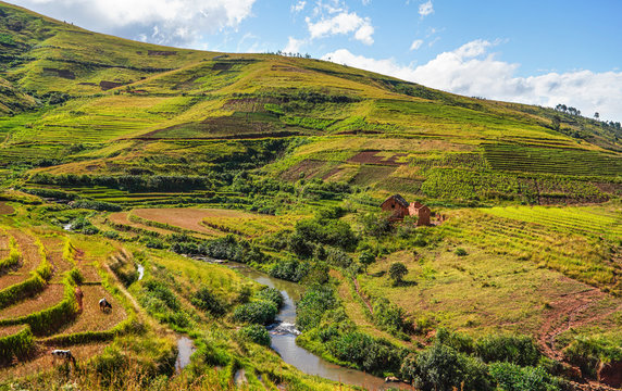 Typical Madagascar landscape - green and yellow rice terrace fields on small hills with clay houses in Andringitra region near Sendrisoa