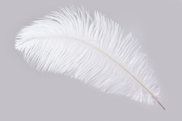 White ostrich feather isolated on gray background Fototapete