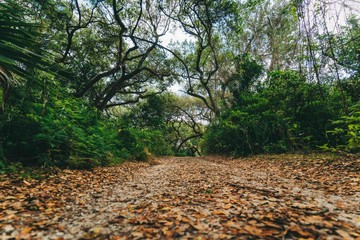 autumn forest nature tree palm jungle green summer tropical road abundant sky beautiful leaves foliage florida highway old outdoors hiking environment spring