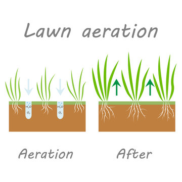Lawn aeration stage illustration, lawn grass. Before and after stage vector, process of aeration isolated on white background