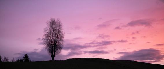 Photo sur Toile Rose banbon Baim in der Morgenstimmung