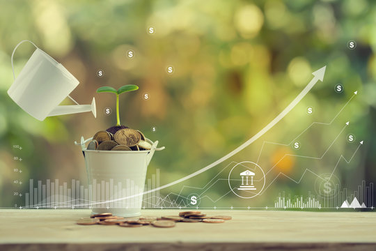 Banking and finance, Saving money for future growth concept: Pours water from a watering can, Green sprout on bucket full of coins and graph growth business investment .