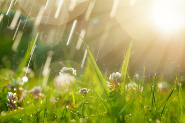 Magic background with clover and raindrops. Beautiful summer landscape