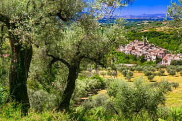 Traditional hill top medieval villages (borgo) surrounded by olive trees. Italy , Rieti province