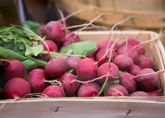 Radish Harvest at the agriculture fair