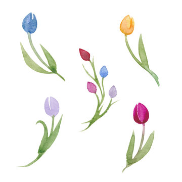 Watercolor Flowers Tulips for Easter and Spring