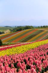 field of flower in Hokkaido