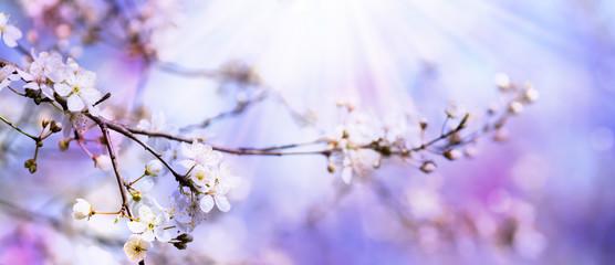 baumblüte Fototapete