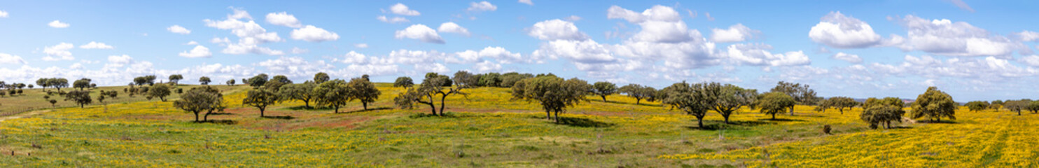 landscape near Ourique at the coast aerea of Algarve in Portugal with olive trees, colorful fields and cork trees