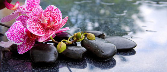Branch of pink orchids isolated on black background.