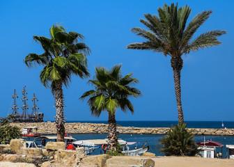 palmy wybrzeże statek