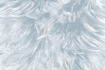 Beautiful white baby blue colors tone feather pattern texture cool background for decorative design wallpaper and other