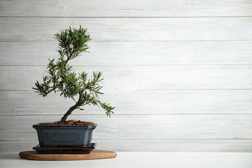 Japanese bonsai plant on white wooden table, space for text. Creating zen atmosphere at home