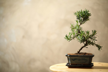 Deurstickers Zen Japanese bonsai plant on wooden table, space for text. Creating zen atmosphere at home