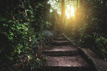 Ancient stairs into the enchanted forest towards sunrise