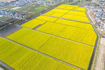 Fotorollo Gelb rapeseed field