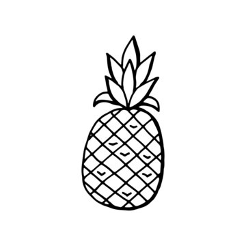 Pineapple hand drawing Isolated on a white background. Vector stock illustration.