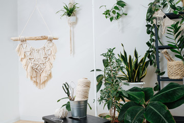 Studio with lots of plants in pots, decorated with macrame embroidery.
