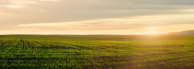 Wall Mural - panoramic view of green field in the light of the evening sun