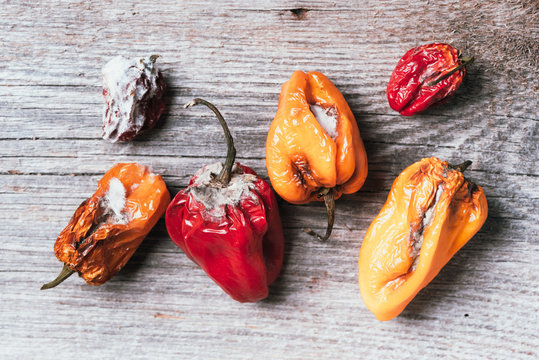 Moldy and wrinkled rotten peppers. Concept of unhealthy, decompose, spoiled vegetables. Garbage dump rotten food on wooden background. Top view. Copy space. Waste concept