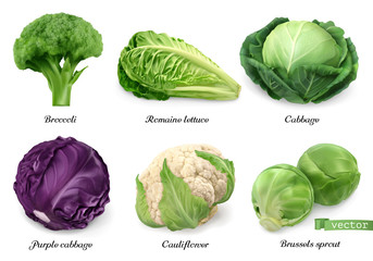 Cabbages and lettuce, leaf vegetables realistic food objects . Broccoli, romaine lettuce, green and purple cabbages, cauliflower, brussels sprout . 3d vector icon set Wall mural