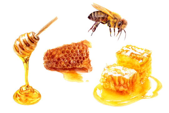 Honey stick, bee and honeycomb set watercolor isolated on white background