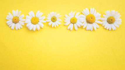 Gänseblümchen, Margeriten - Blüten auf buntem Karton, Vorlage für Design, Hintergrund