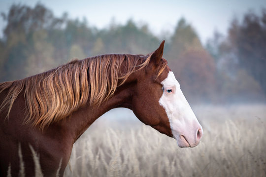 Portrait red horse with white face and blue eyes on nature background