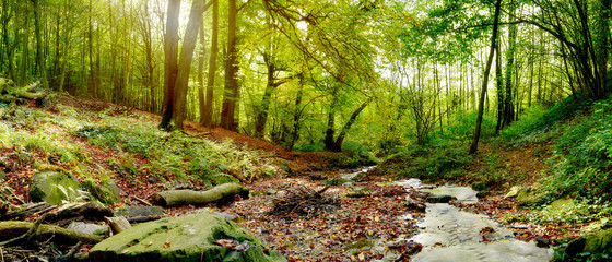 Foto auf Gartenposter Wasserfalle Forest panorama in autumn with stream and a lot of autumn leaves