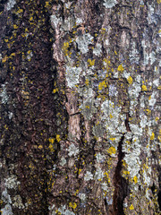 Door stickers London tree texture close up