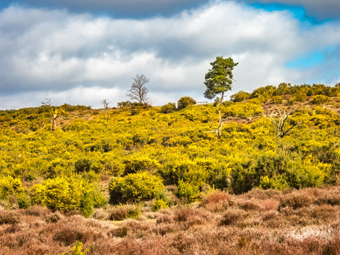 Frensham Heath in Surrey UK