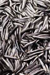 Anchovy is fresh in a freshly caught case. Close up.