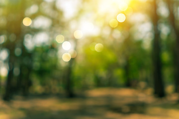 Fotobehang Bomen Blur nature bokeh green park by beach and tropical coconut trees