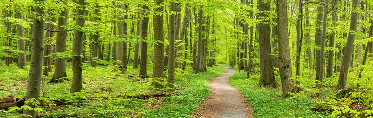 Frühling im Nationalpark Hainich, Wanderweg windet sich durch grünen Wald, Thüringen, Deutschland