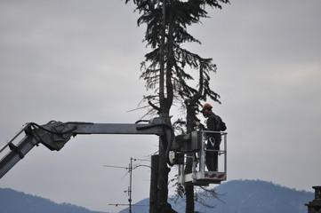 Unrecognisable gardener pruning a tree
