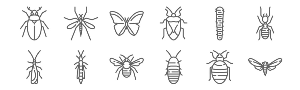 set of 12 insects icons. outline thin line icons such as bug, madagascar hissing cockroach, bug, caterpillar, butterfly, mosquito