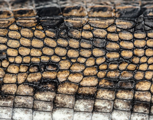 detail of a Fish-eating crocodile scales, Gavial