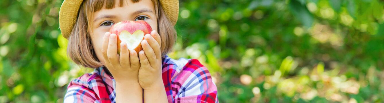 child picks apples in the garden in the garden. Selective focus.