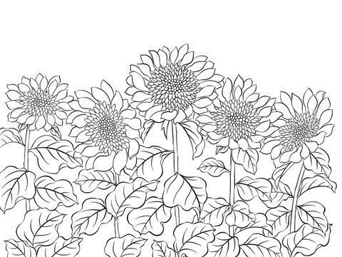 Digital illustration of sunflowers, black and white.
