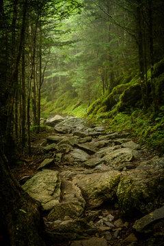 Rocky Appalachian Trail in Fog