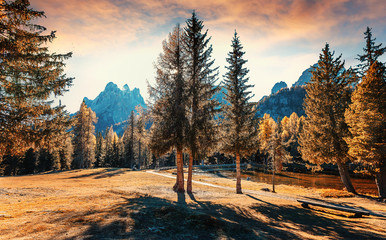Fotomurales - Wonderful Alpine Highlands in Sunny Day. Amazing nature Scenery. mountain hills under sunlight. beautiful mountain landscape with forest and rocky mount glowing bright sunlit.