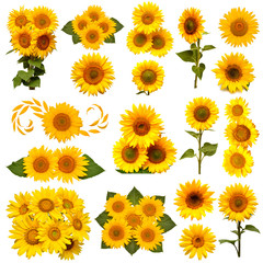 Fototapete - Sunflowers collection isolated on white background. Sun symbol. Flowers yellow, agriculture. Seeds and oil. Flat lay, top view. Bio. Eco