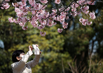 A visitor wearing a protective face mask following an outbreak of the coronavirus disease takes a photograph of blooming cherry blossoms at Ueno park in Tokyo, Japan
